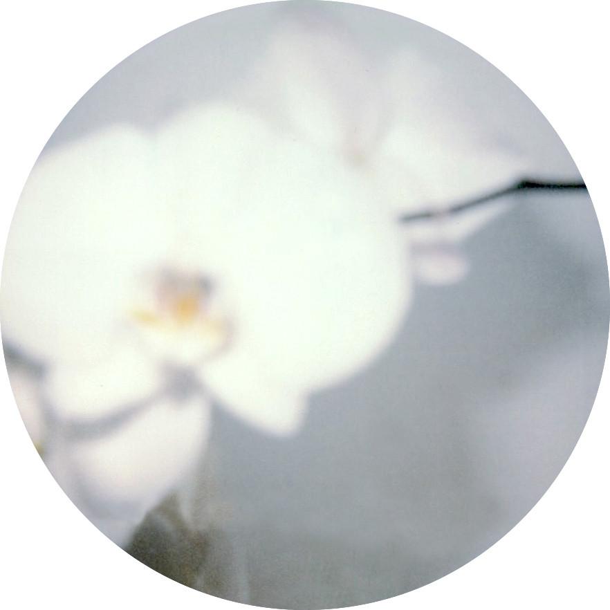 Fleurs blanches II, 2018, 53*53 cm, Véro