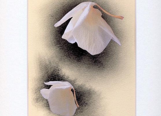 Deux orchidées -Véronique SABLERY