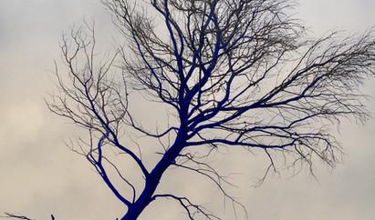ALEXANDRA TAUPIAC, PHOTOGRAPHIE, BLUE TR