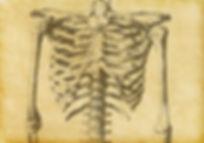 Menschliches Skelett Skizze