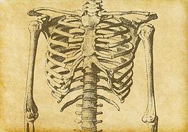 Sketch squelette humain