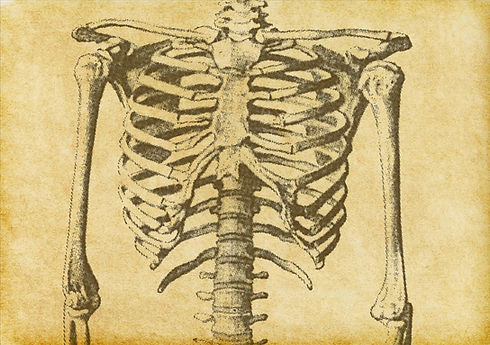 Human Skeleton Sketch