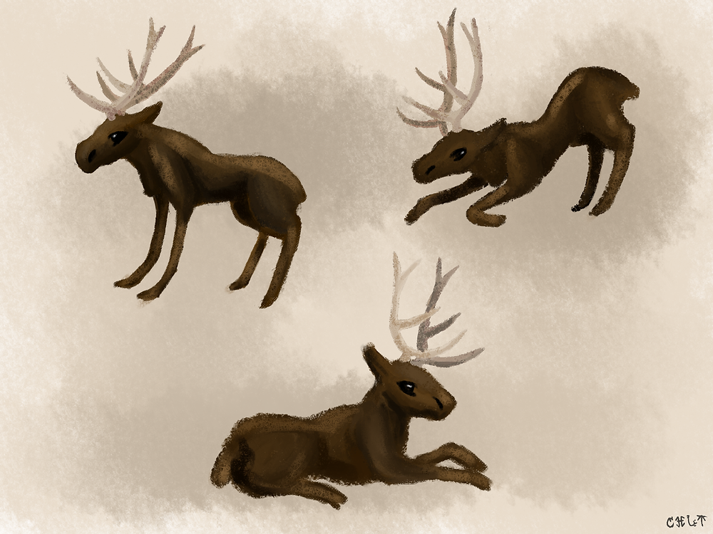 Test Elk Designs 1.png