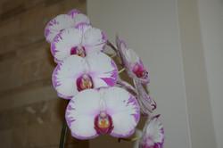 Orchid Stouffville Yoga Life