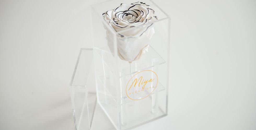 Single acrylic box