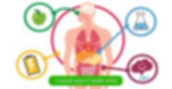metabolismo-bioquimica.jpg