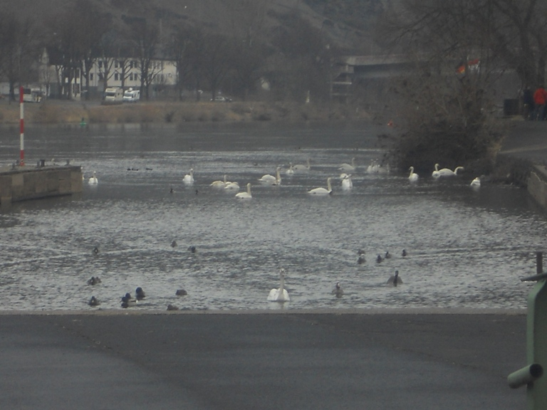 2012-02-22 Cochem_130