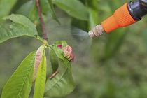 tree spray 3.jpg