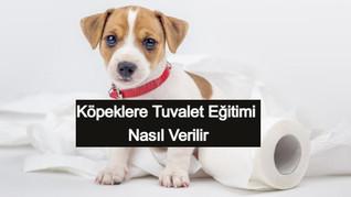 1 Haftada Köpeklere Tuvalet Eğitimi Nasıl Verilir