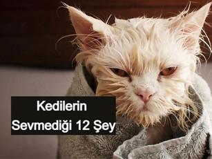 Kedilerin Sevmediği 12 Şey Sakın Yapma Bunları!