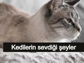 Kedilerin Sevdiği 12 Şey Kesin Yap Bunları!