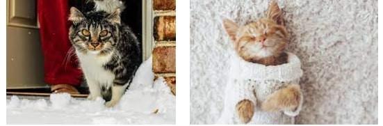 Kediler Soğuk Sevmiyor