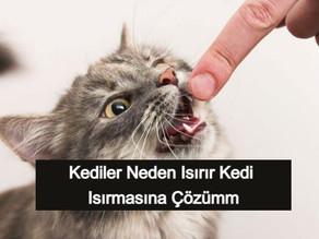 Kediler Neden Isırır? Kedi Isırmasına Çözüm