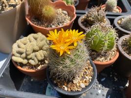 晴れ間の花
