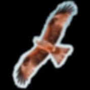eagle-3.png