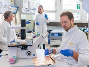 Welche Rolle spielt das Protein TIMP1 für Männer?