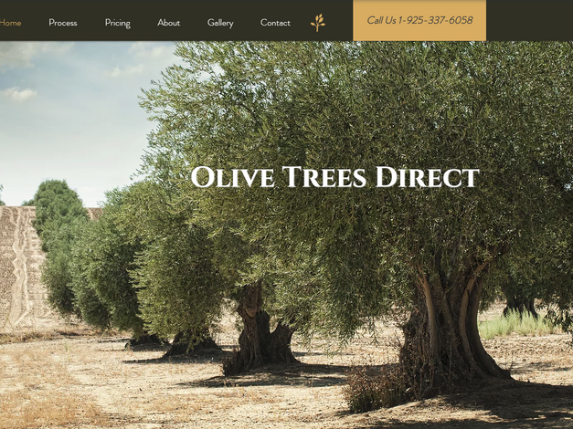 Small Business/Olive Trees