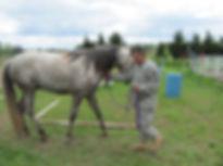 horse and vet.jpg