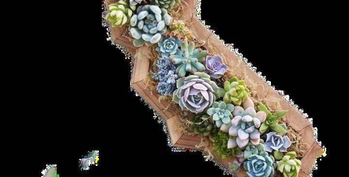 CA Planter Recycle