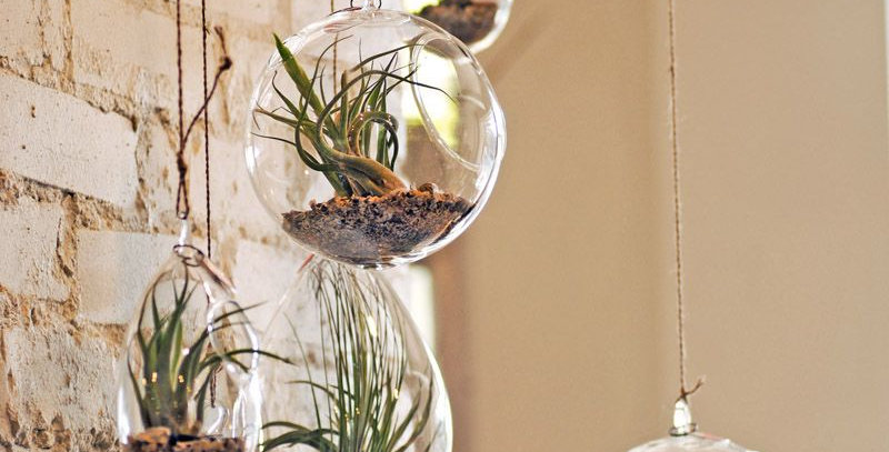 Hanging Glass Succulents