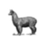 White Lama Logo_v01_Mouseover.png