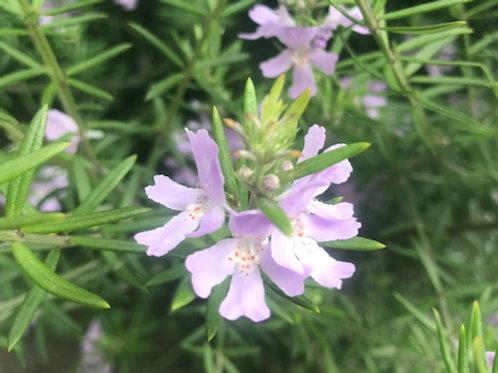 植物代謝酵素(単回)
