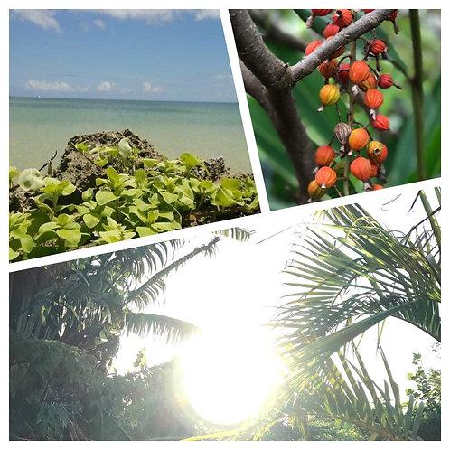 はっちゃんの「島の薬箱〜植物の意識・エネルギー編」 on Zoom