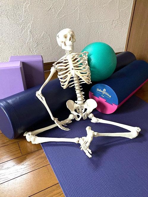 筋骨格系を知る!実践に繋げる「機能解剖学」 on Zoom(全回)