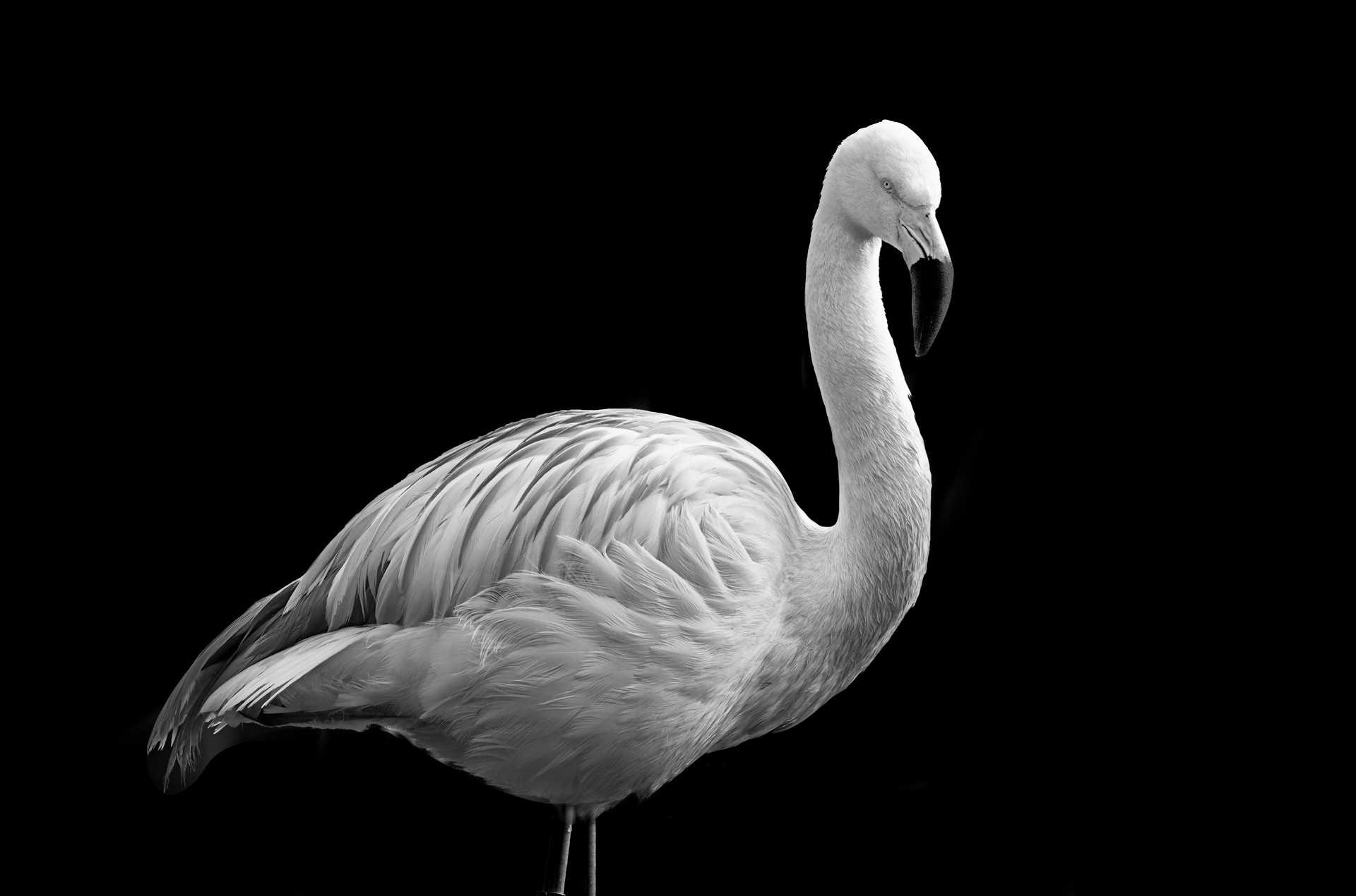 MONO - Flamingo by Stephen McComb (11 marks)