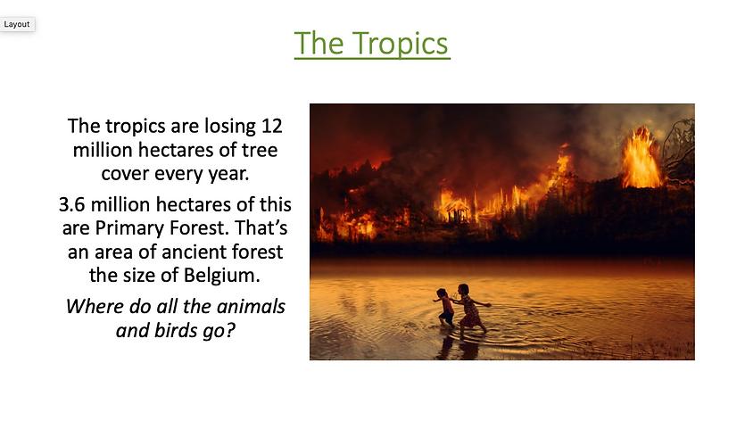 The Tropics.png