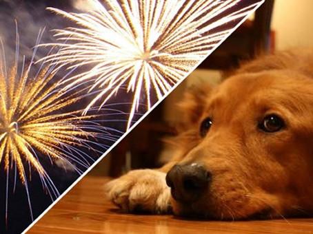 O impacto dos fogos de artifício nos pets