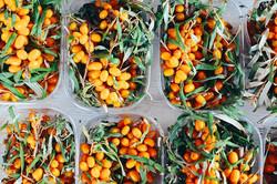 oval-orange-fruit-lot-1508669-2