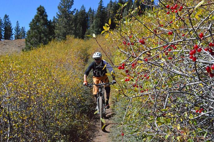 Overgrown Trail.jpg