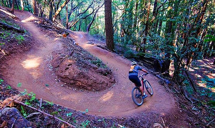 Bay Area Mountain Bike Tours