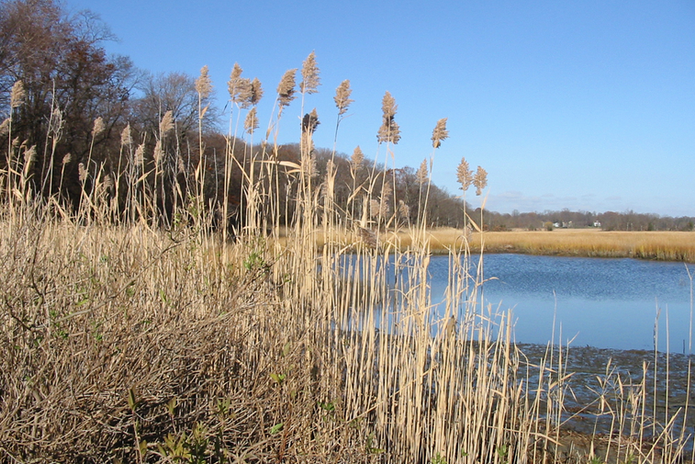 Bude Marshes.png