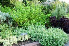 Accent Garden Donation- Wellness Garden