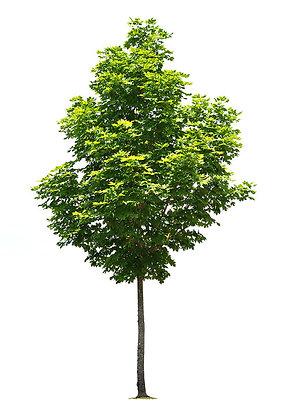 Tree-Wellness Garden Donation