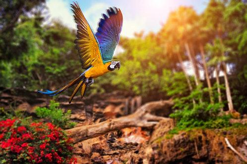 Изображение тропического фона