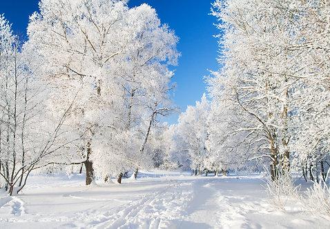 Зимний парк в снегу