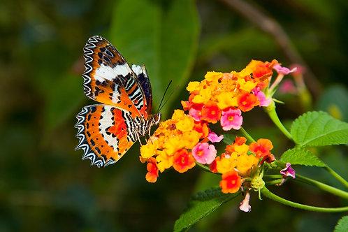Красивая бабочка на красочном цветке
