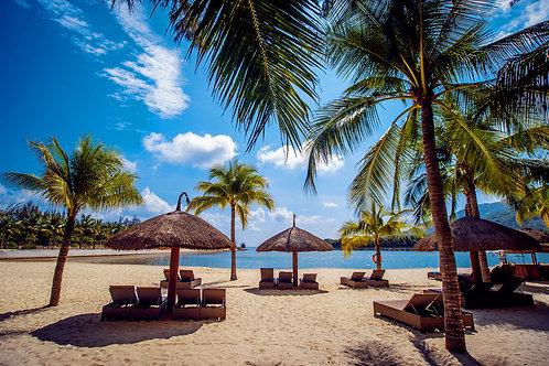 Красивый вид на море с пальмами