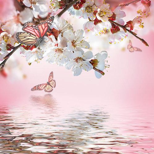 Абрикосовые цветы весной, цветочный фон