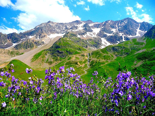 Цветущие ирисы в горах