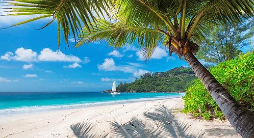 Красивый песчаный пляж с пальмой, Ямайка Парадайз