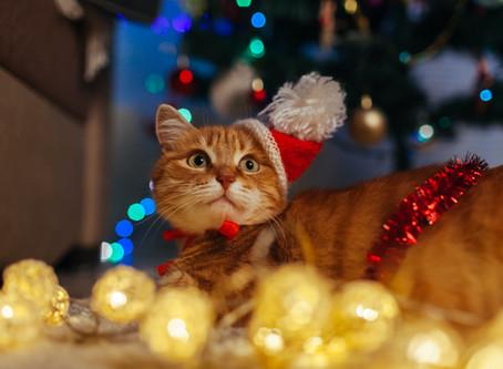 Kerst en kattenkots