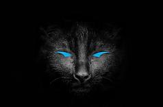 CAT IMAGE.png