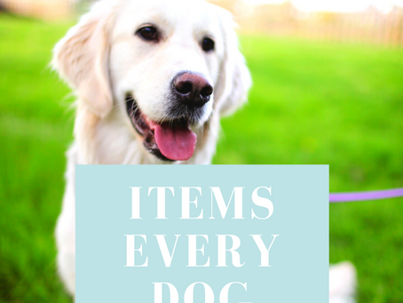 Items Every Dog Owner Needs