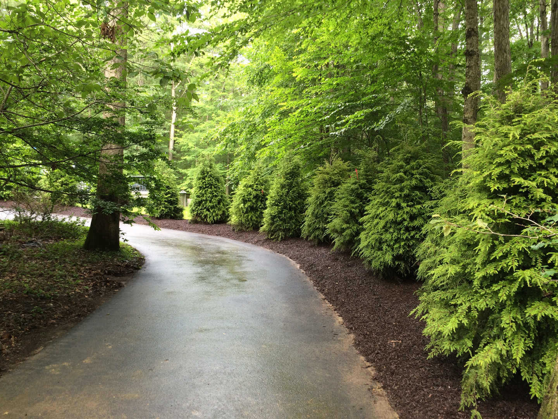 Mathiesen Landscape Design: Tree Lined Driveway