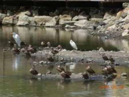 birds_in_the_pond.jpg
