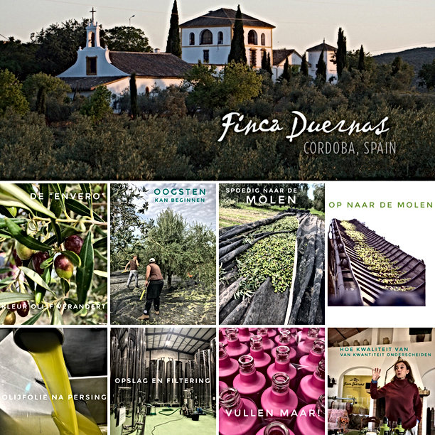 Finca Duernas Spaanse olijfolie